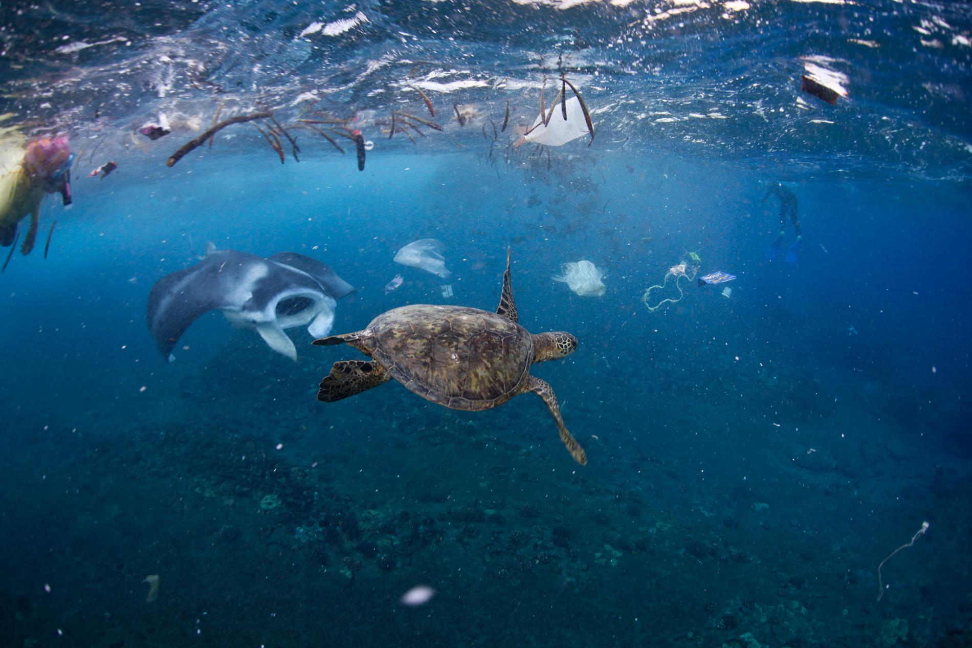 Plastic in Oceans – 5 Fast Facts